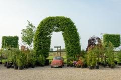 Ornamental-trees-essex-1424-800
