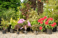 shrubs1-600